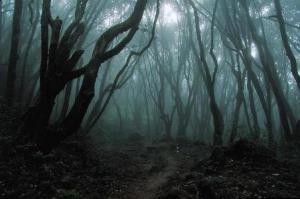 Il bosco, classica ambientazione di tanti horror. Da sempre nascondiglio perfetto per il malvagio