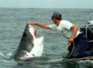 """Lo squalo, in realtà un """"cucciolone"""""""