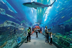 Il tunnel dell'Underwater zoo dentro il Dubai Mall