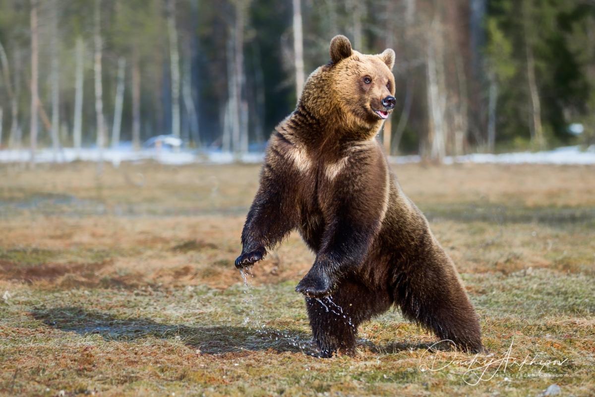 Febbraio: il peto dell'orso e la festa della Candelora