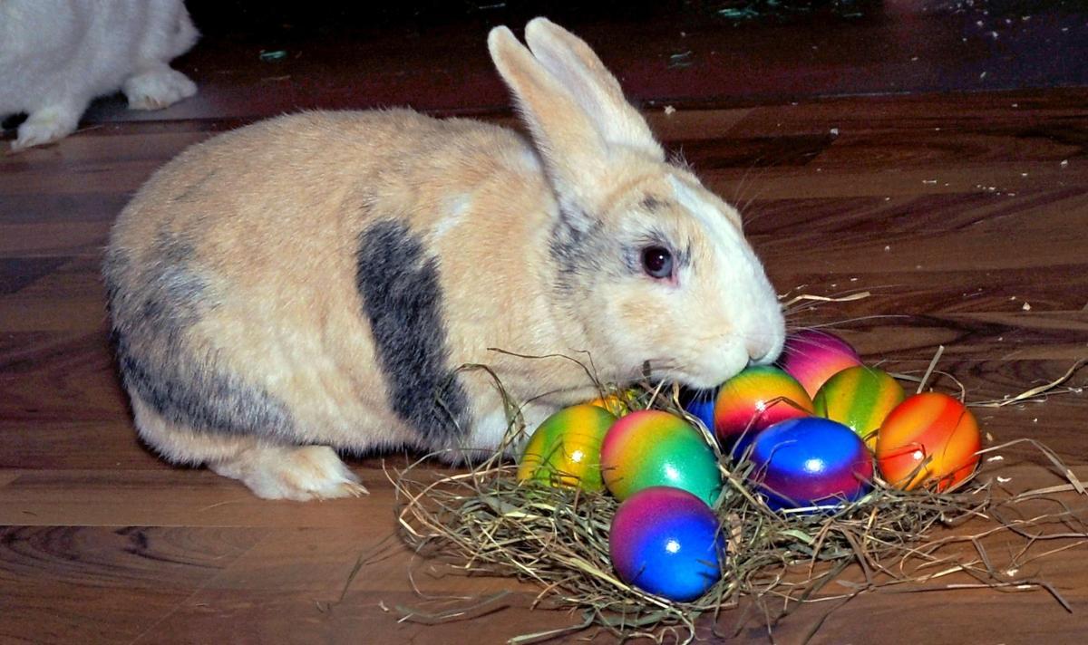 Che c'entra il coniglio con le uova di Pasqua? Molto...