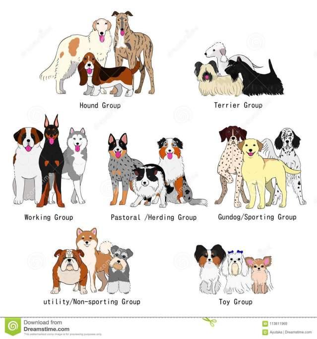 le razze di cane divise in sette gruppi