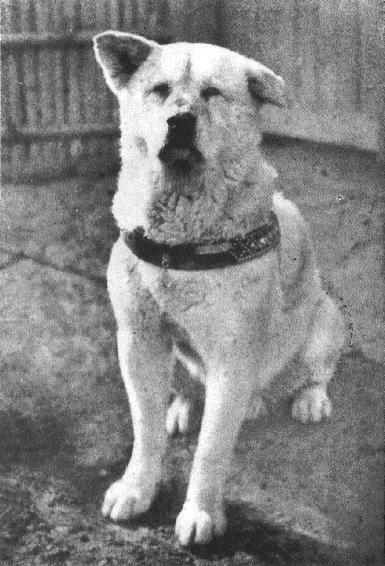 Hachiko il cane più fedele