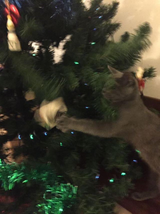 albero di natale con gatto